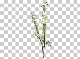 Flower Bouquet Cut Flowers Artificial Flower Chamelaucium PNG