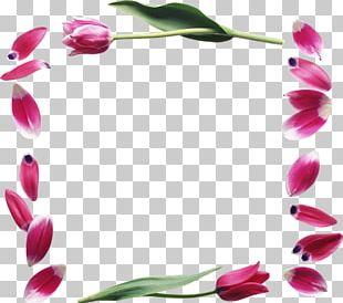Petal Flower Tulip 8 March PNG