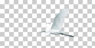 Water Bird Wing Beak Feather PNG
