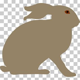Arctic Hare Snowshoe Hare Rabbit PNG
