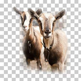 Spanish Goat Sheep Cattle Goat Milk PNG