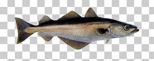 Norway Fish Pollack Pollock Atlantic Cod PNG