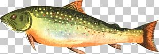 Brown Trout Rainbow Trout Computer Icons PNG