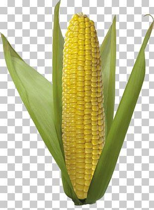 Corn On The Cob Sweet Corn Field Corn Flint Corn PNG