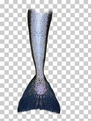 Mermaid Tail Drawing Siren PNG