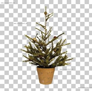 Spruce Christmas Tree Christmas Ornament Fir Pine PNG