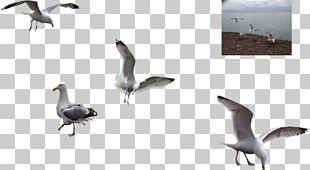 Water Bird Bird Migration Animal Migration Goose PNG