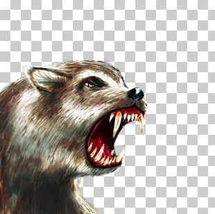 Gray Wolf Raccoon Dire Wolf The Battle For Wesnoth Snout PNG