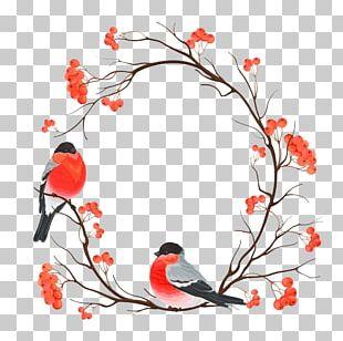 Bird European Robin Christmas Snowman Painting PNG
