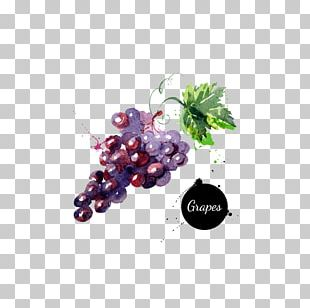 Grape Watercolor Painting Drawing PNG