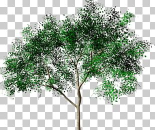 Tree Forest Drawing Painting PNG