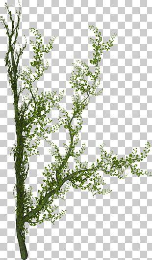 Plant Tree Liana Vine PNG