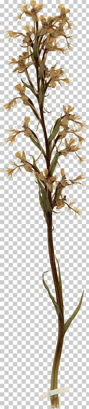 Twig Plant Stem Houseplant PNG