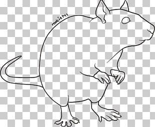 Line Art Rodent Laboratory Rat Mouse Brown Rat PNG