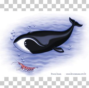 Killer Whale Southern Right Whale Baleen Whale North Atlantic Right Whale PNG