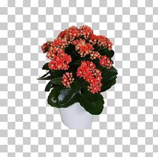 Cut Flowers Flowerpot Houseplant Annual Plant Shrub PNG