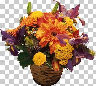Cincinnati Flower Show Desktop Transvaal Daisy PNG