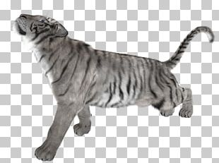 White Tiger Cat Felidae PNG