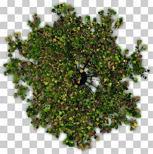 Tree Shrub Portable Network Graphics Adobe Photoshop PNG