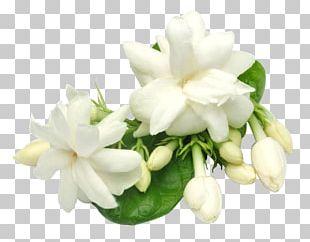 Arabian Jasmine Plant Oil Perfume Candle PNG