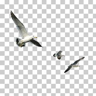 Bird Goose Computer File PNG