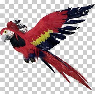 Macaw Parrot Bird Feather Beak PNG
