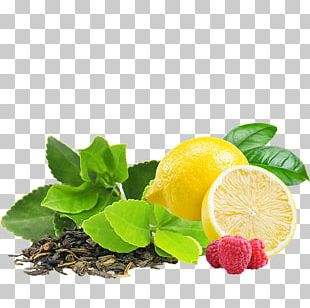 Green Tea Infuser Infusion Drink PNG