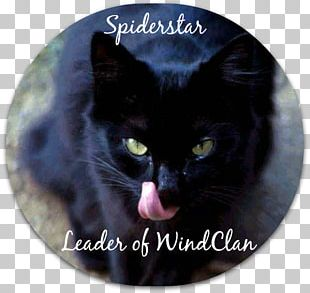 Black Cat Domestic Short-haired Cat Whiskers Mumbai PNG