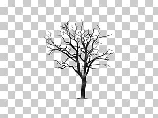 Twig Tree Branch Trunk Pine PNG