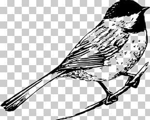 Drawing Birds Drawing Birds Black And White PNG
