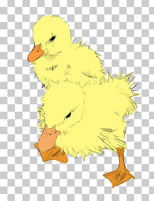 Duck Beak Feather PNG