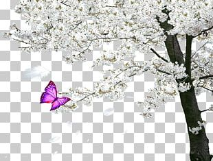 Cherry Blossom Tree Spring PNG