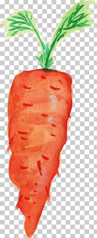 Carrot Organic Food Transparent Watercolor Vegetable PNG