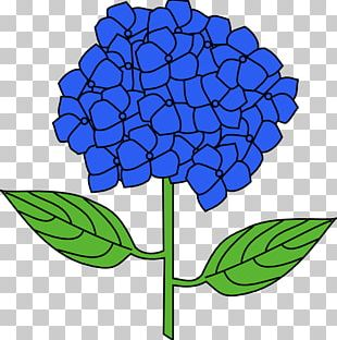 French Hydrangea Flower Drawing PNG