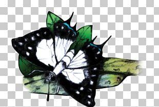 Monarch Butterfly Fijian Archipelago Moth Fijian Swallowtail PNG