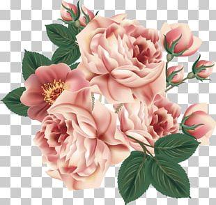 Centifolia Roses Flower Floral Design Garden Roses PNG