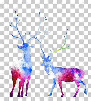 Moose Reindeer Watercolor Painting Elk Capreolinae PNG