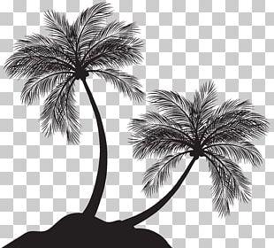 Arecaceae Silhouette PNG
