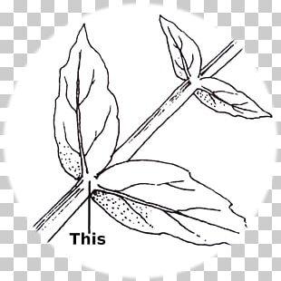 Twig /m/02csf Line Art Leaf Graphics PNG