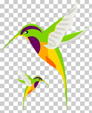 Hummingbird Drawing Stock Photography PNG