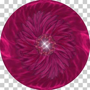 Magenta Circle PNG