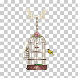 Birdcage Parrot PNG