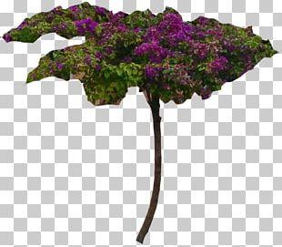 Shrub Bougainvillea Plant Flower Tree PNG