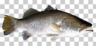 Salmon Fish Products Barramundi Perch Bass PNG