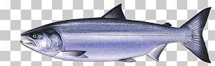Thunnus Sardine Squaliform Sharks Oily Fish Requiem Sharks PNG