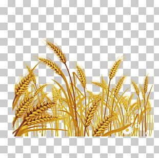 Wheat Euclidean Stock Illustration PNG