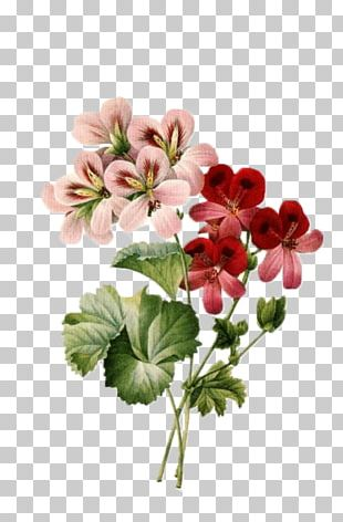 Flower Bouquet Vintage Clothing Floral Design PNG