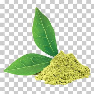 Green Tea Ice Cream Latte Matcha PNG
