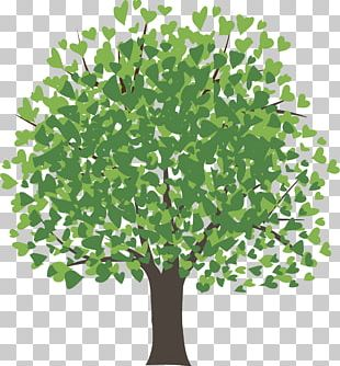 Mangifera Indica Tree Mango Drawing PNG