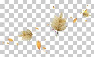 Autumn Leaves Light Leaf PNG
